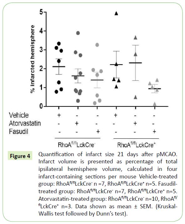 translational-neuroscience-infarct-size